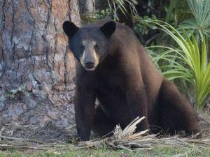 bear_1460590662296_1593821_ver1.0