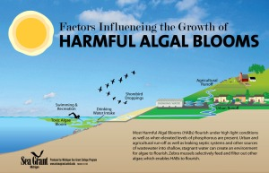 Harmful-Algal-Bloom-illustration-1000w