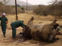 Dead_rhino_Kruger_400x300