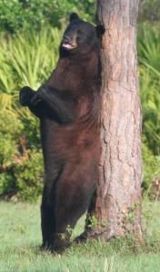 IMG_IMG_bearB